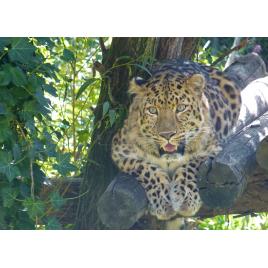 Zoo Des Sables d'Olonne, Les Sables-d'Olonne