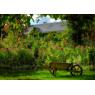 Fondation Claude Monet  : la Maison et les Jardins, Giverny
