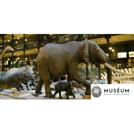 MNHN : Grande Galerie de l'Evolution et Expositions permanentes et temporaires