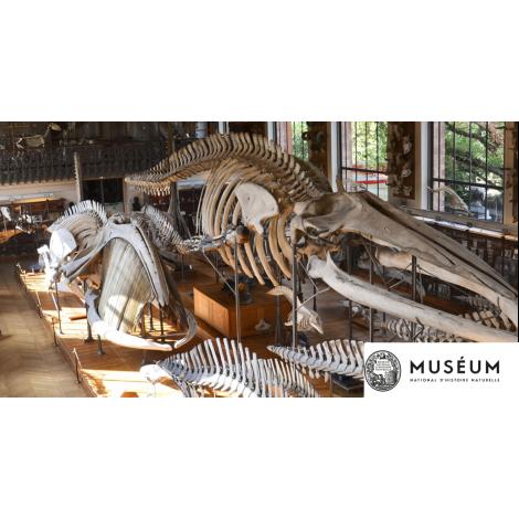 MNHN : Les Galeries d'Anatomie comparée et de Paléontologie , Paris