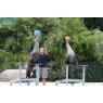 Zoo Parc de Beauval, Saint-Aignan-sur-Cher