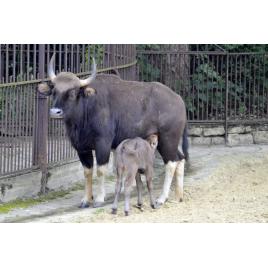 MNHN : La Ménagerie, le zoo historique de Paris