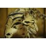 MNHN : La Ménagerie, le zoo historique de Paris , Paris
